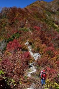 000_0391 紅葉が綺麗 jpg